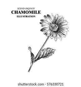 Hand drawn chamomile isolated on white background. Flowers sketches elements. Retro hand-drawn floral vector illustration.