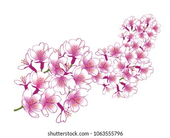Hand drawn cherry blossom sakura branch design. EPS10 vector illustration.