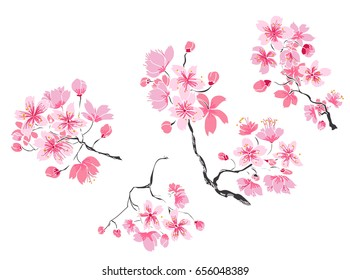 Hand drawn Cherry branches with flowers, Coloring book sakura isolate on white background