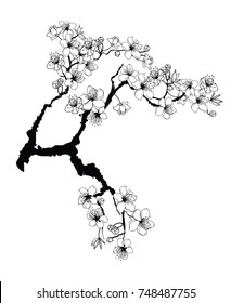Hand drawn Cherry branches with flowers,Black and white Coloring book.Sakura plant  silhouette on white background.