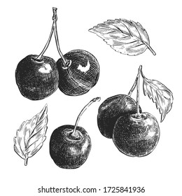 Hand drawn cherry sketch, vintage ink illustration isolated on white background. Vector food art.