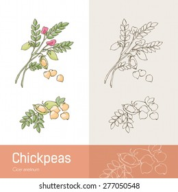 Hand drawn chickpeas with plant, beans and flower