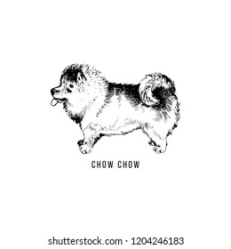 Hand drawn Chow Chow. Vector illustration in retro style