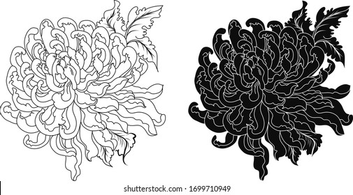 Hand drawn chrysanthemum flower outline and isolate on whith background. Botanical chrysanthemum flower tattoo.