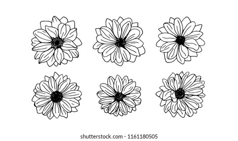 Hand drawn chrysanthemum flowers, branches, leaves isolated on a white background. Chrysanthemum Flower.