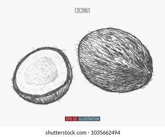 Hand drawn coconut isolated. Template for your design works. Engraved style vector illustration.