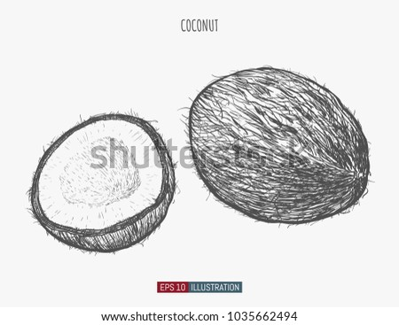 hand drawn coconut isolated template your stock vector royalty free
