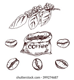 hand drawn coffee beans, sketch of coffee beans. vector drawing