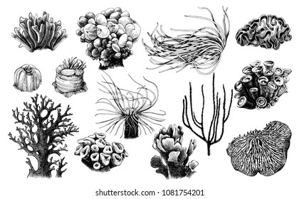 Hand drawn collection of corals reef plants. High quality vector illustration
