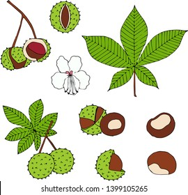 Сhestnuts hand drawn collection. Plant of chestnuts, leaves, flower. Cartoon illustration of the sweet chestnuts.