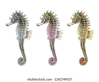 Hand drawn collection Seahorses with watercolor texture, isolated vector illustration on white background.