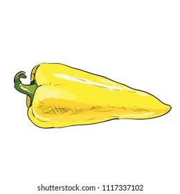 Hand drawn color sketch of bell pepper. Vintage engraved illustration. Botanical pepper. Vegetarian food drawing. Vector illustration for restaurant menu design