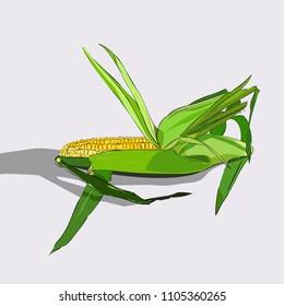Hand drawn color sketch of corn cob. Vintage engraved illustration. Botanical corn. Vegetarian food drawing. Vector illustration