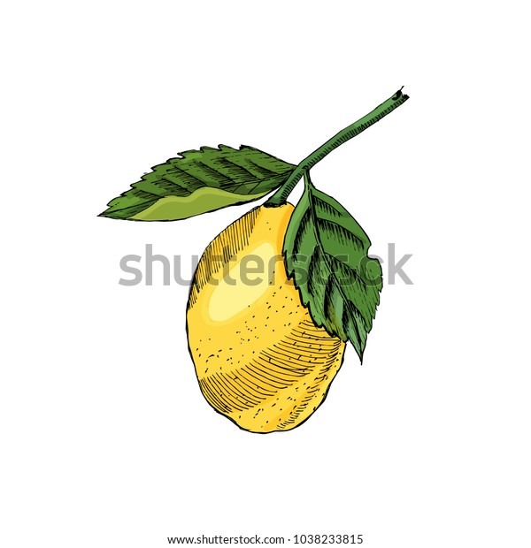 Hand drawn colored sketch with decorative lemon isolated on white background. Vector illustration.