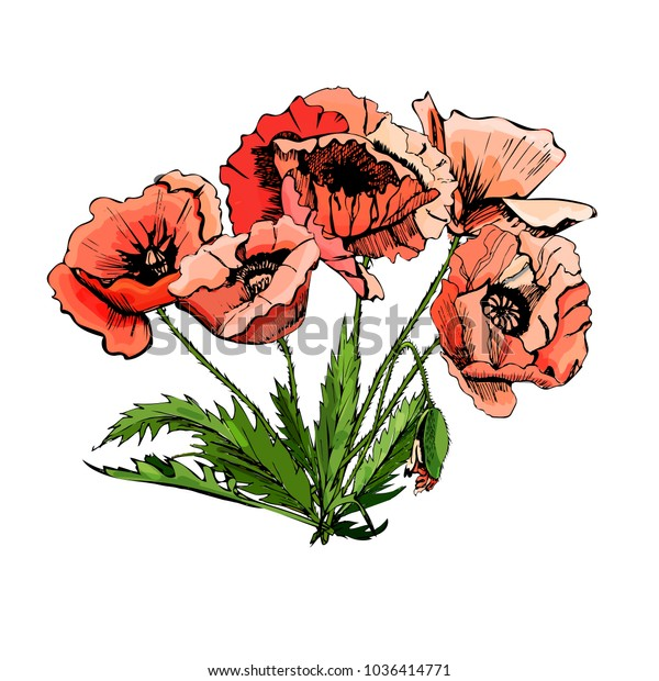 Hand drawn colored  sketch with poppy flowers isolated on white background. Decorative composition.Vector illustration.
