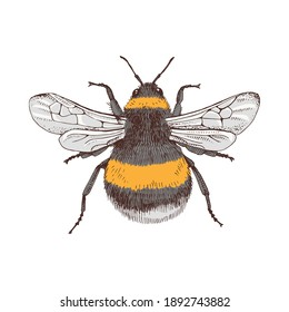 Hand drawn colorful bumblebee isolated on white background. Vector illustration in retro style