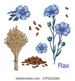 Hand drawn colorful flax plant, flowers, seeds and  dry flax seed in sheaves. Vector illustration in retro style isolated on white background.