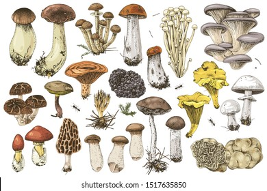Hand drawn colorful mushrooms collection. 17 types of edible mushrooms. Vector illustration