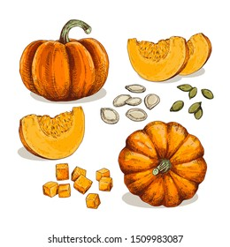 Hand drawn colorful pumpkin. Set sketches with pieces pumpkin, cubes and seeds. Vector illustration isolated on white background.