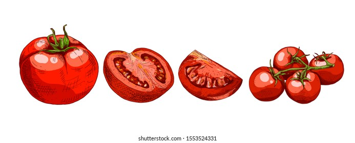 Hand drawn colorful red tomato. Set sketches with cut tomato, slice of tomato and tomatoes branch. Vector illustration isolated on white background.