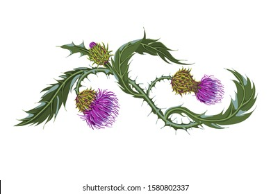 Hand drawn composition of a thistle flower. Milk Thistle isolated on white. Vector botanical illustration.
