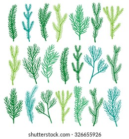 Hand drawn coniferous green tree pine branches vector set. Isolated on white background