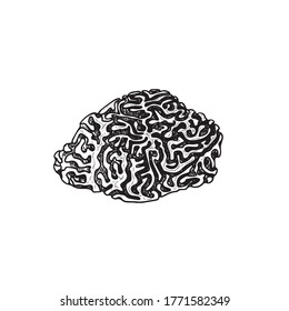 Hand drawn corals. Brain coral. Underwater reef element. Vector illustration isolated on white background.