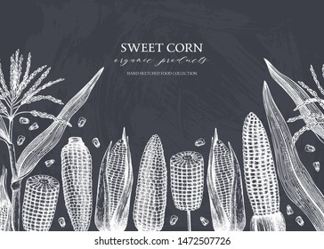 Hand drawn corn design on chalkboard. Vector food background. With Maize plant, corn cob and grains. Botanical drawing of  cereal plants. Great for packaging, menu, label, recipe. Vintage template.