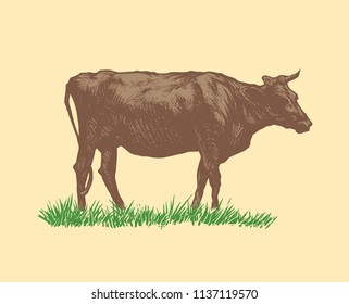 Hand Drawn Cow. vector illustration