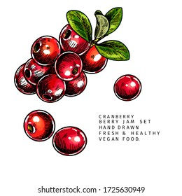 Hand drawn cranberry branch, leaf and berry. Engraved colored vector illustration. Cowberry, blueberry plant. Summer harvest, jam or mamalade vegan ingredient. Menu, package, cosmetic and food design