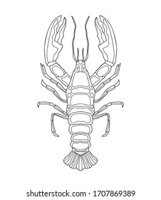 Hand drawn crayfish (cancer) with simple decor on white isolated background. River animal. For coloring book pages.