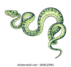 Hand drawn creeping Garden Tree Boa isolated on white background. Vector green winding spotted snake, side view. Animalistic illustration in vintage style, t-shirt design, tattoo art.