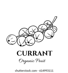 Hand drawn currant icon. Vector badge fruit in the old ink style for brochures, banner, restaurant menu and market