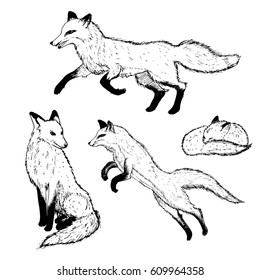 Hand drawn cute foxes