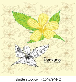 Hand Drawn Damiana Flower Vector Illustrations