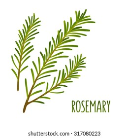 Hand drawn decoration element, green rosemary sprigs. Vector floral illustration.