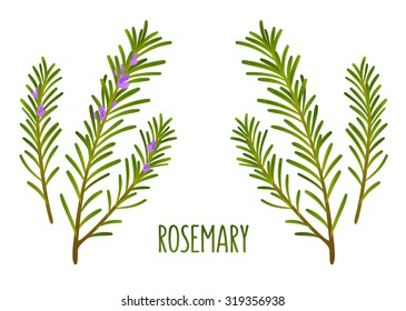 Hand drawn decoration element, green rosemary sprigs with and without flowers. Vector floral illustration.