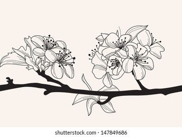 hand drawn decorative cherry blossom, design element