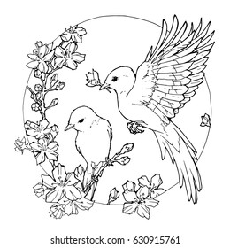 hand drawn decorative illustration of spring birds; coloring page with birds and flowers