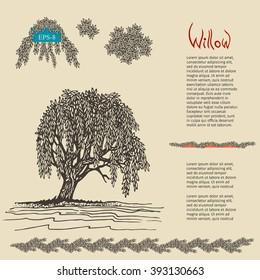 Hand drawn decorative Willow tree. Vector illustration.