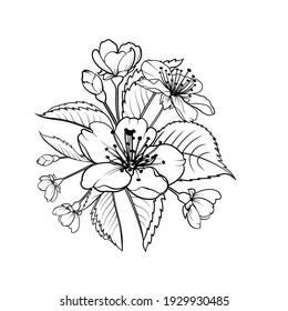 Hand drawn design elements sakura flowers collection