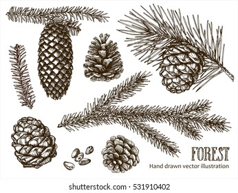 Hand drawn design vector elements. Forest collection of coniferous branches and pine cones isolated on white background.
