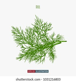 Hand drawn dill isolated. Template for your design works. Engraved style vector illustration.