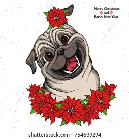 Hand drawn dog. Cute Pug head and Christmas flowers red Poinsettia. Isolated