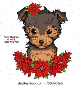 Hand drawn dog. Cute Yorkshire Terrier face and Christmas flowers red Poinsettia. dog print/dog poster/dog illustration