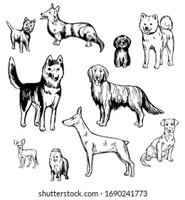 Hand drawn dogs.  Vector sketch  illustration.