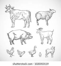 Hand Drawn Domestic Animals Set. A Collection of Pig, Cow, Goat, Lamb and Birds Silhouettes. Engraving Style Drawings. Isolated.