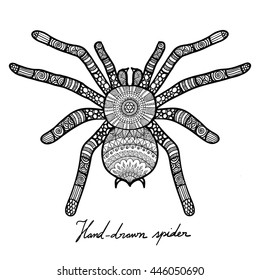 Hand drawn doodle design of spider for T-Shirt graphic,adult coloring book and tattoo - Stock vector