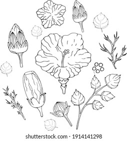 hand drawn doodle hibiscus set  black and white background