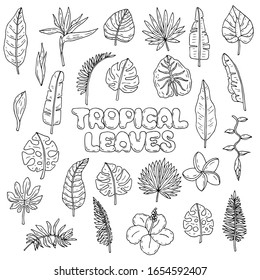 Hand drawn doodle Tropical leaves and flowers icons set Vector illustration Floral symbols collection Cartoon letters and botanical decoration elements. Sketch banana palm and monstera leaf